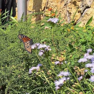 Butterfly Garden at Belle Isle graphic